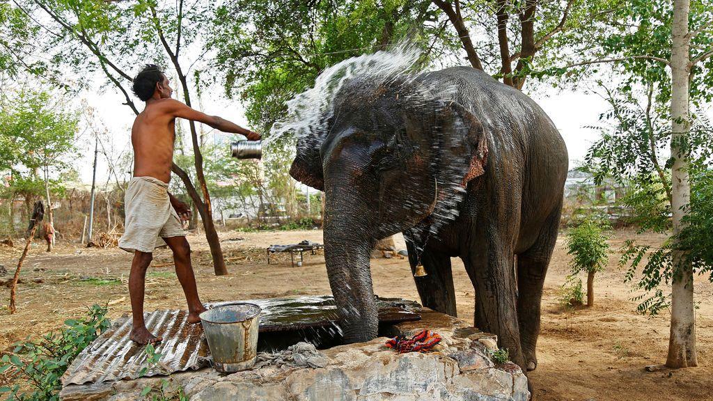 Bañan a un elefante en la India