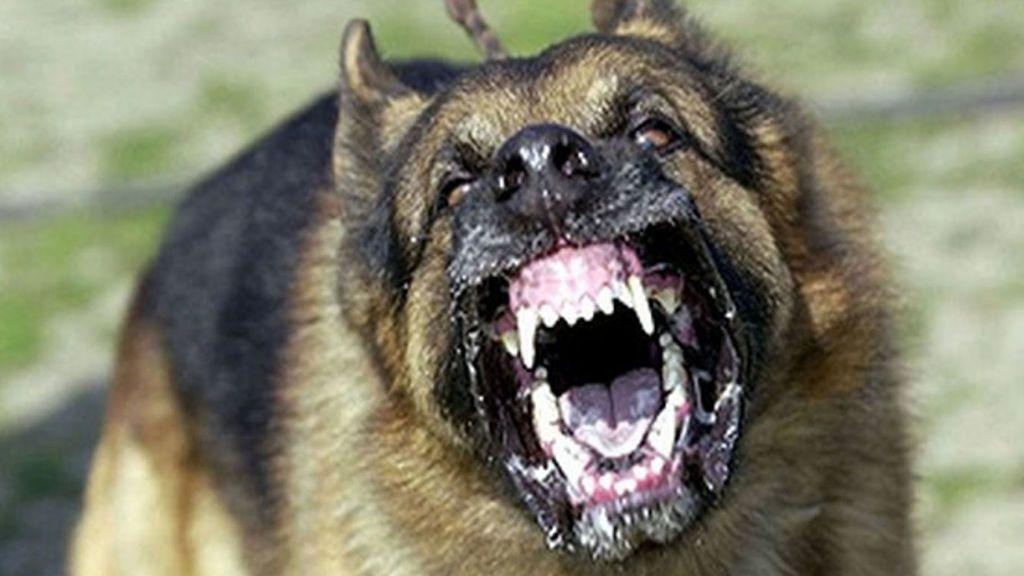 Un niña de 12 años resulta herida con mordeduras en cara y cuerpo por el ataque de dos perros en Talayuela