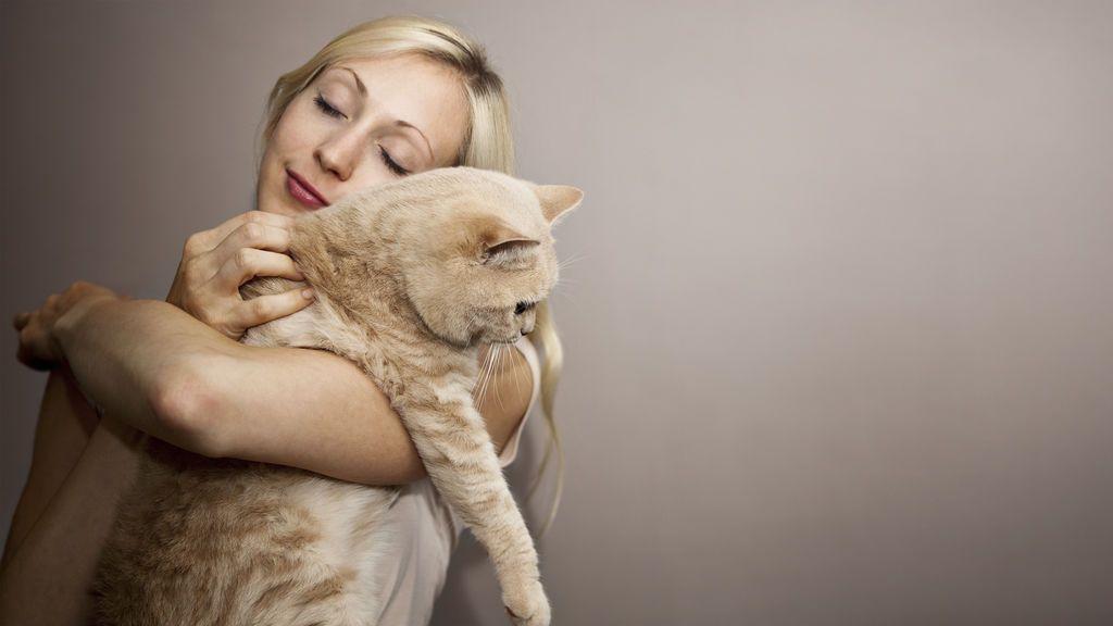 Buscan a una persona para cubrir el puesto de 'abrazador de gatos' en Irlanda