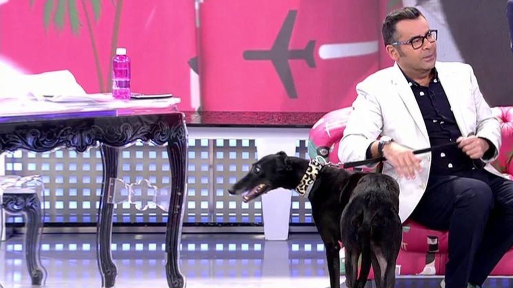 ¡J.J saca su lado más tierno con su perrita Lima!