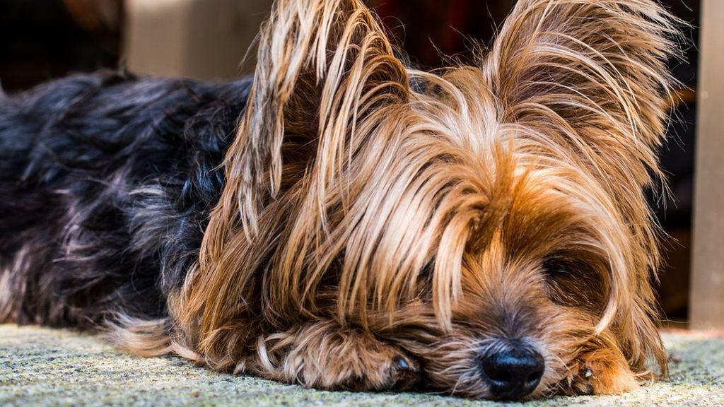 Detenido un hombre que utilizaba a su perro, en estado grave, para pedir limosna en Málaga