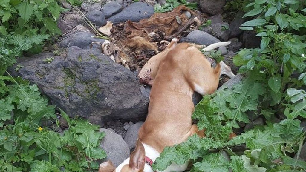 Firmas para evitar que cazadores despeñen a sus perros al acabar la temporada