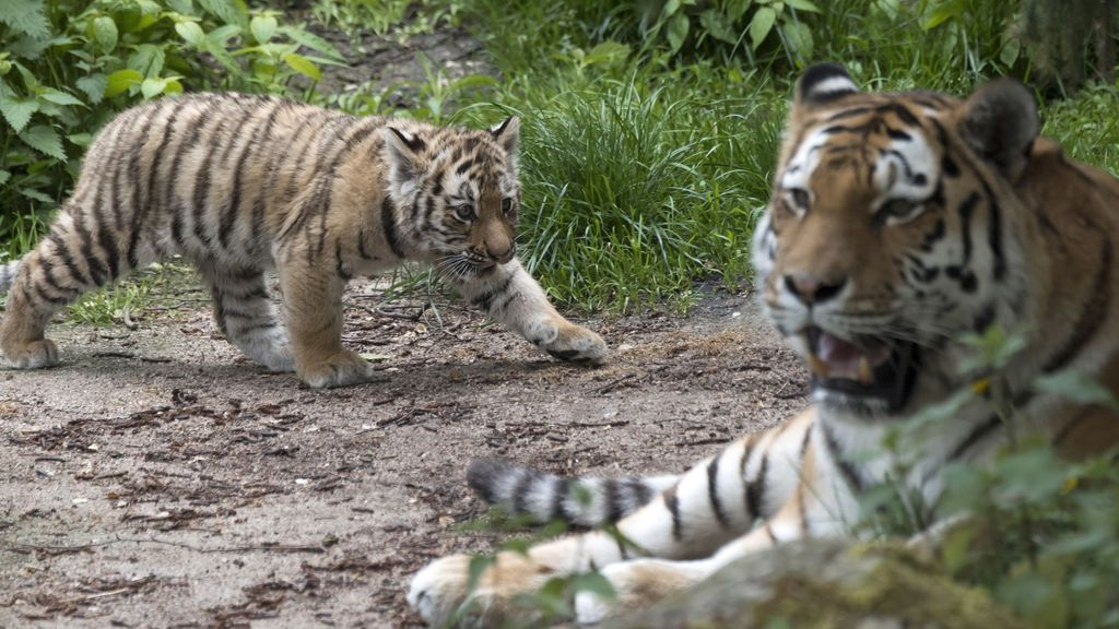 """Evacúan un Zoo en Reino Unido por un """"incidente grave"""""""