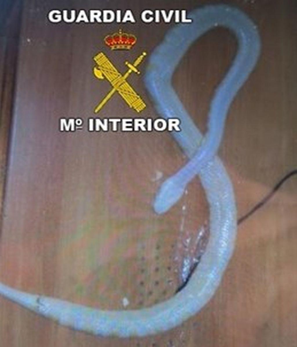 Investigado por vender por internet una serpiente pitón que llegó muerta