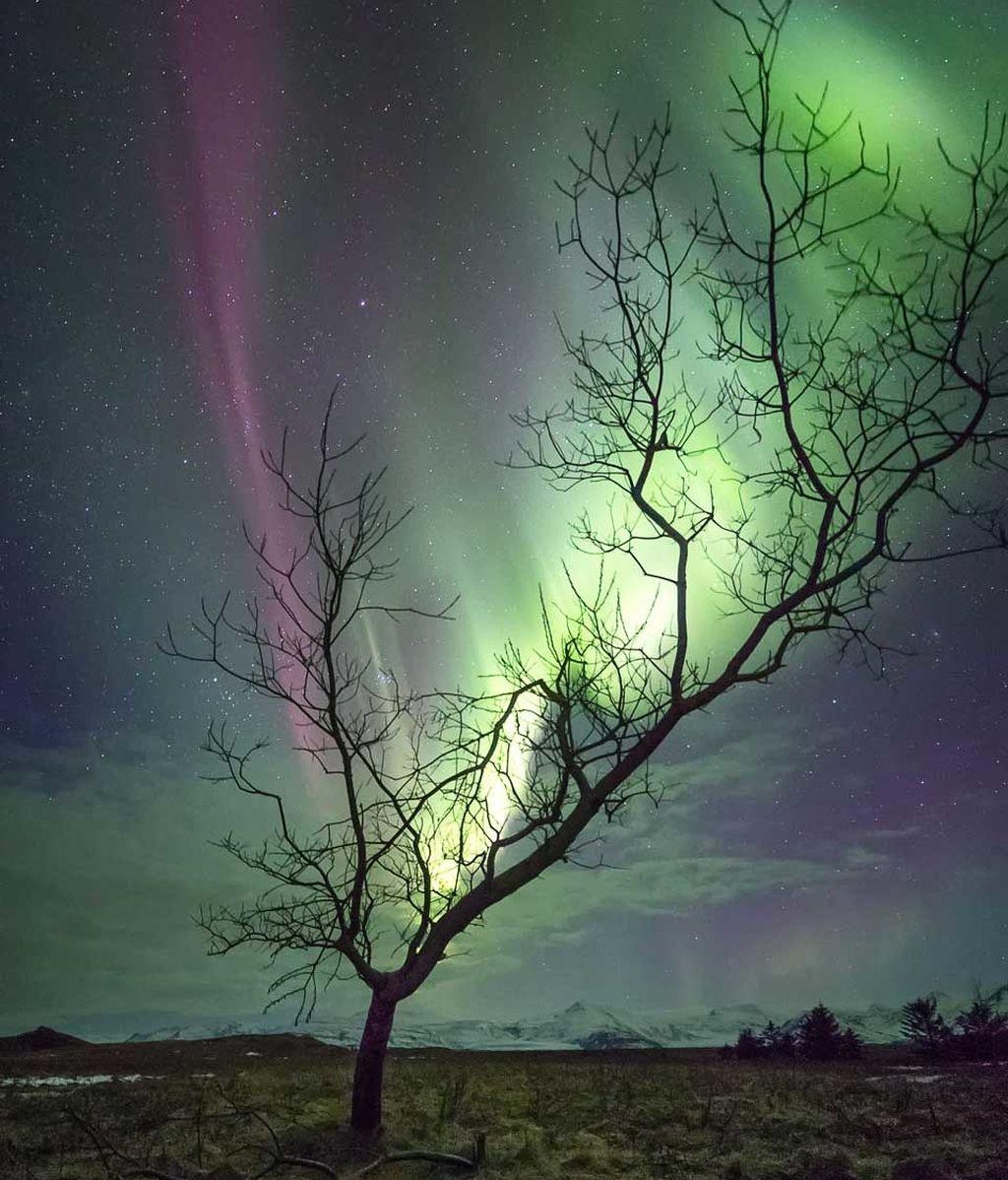 árbol boreal
