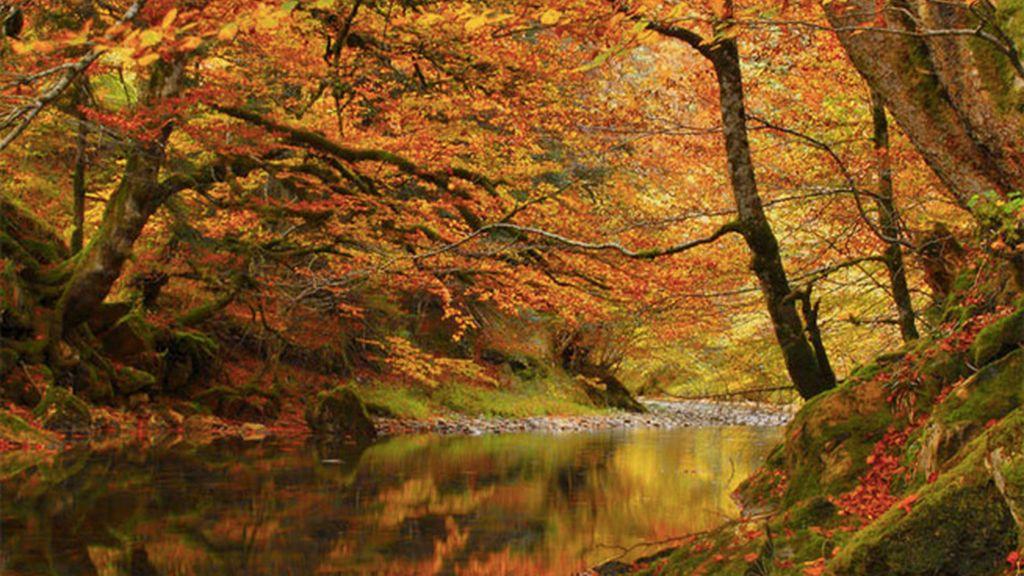 Los misterios de la Selva de Irati (Navarra)