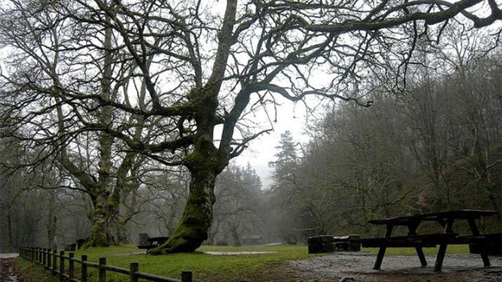 En busca de osos y ciervos en el Parque Natural Saja Besaya (Cantabria)