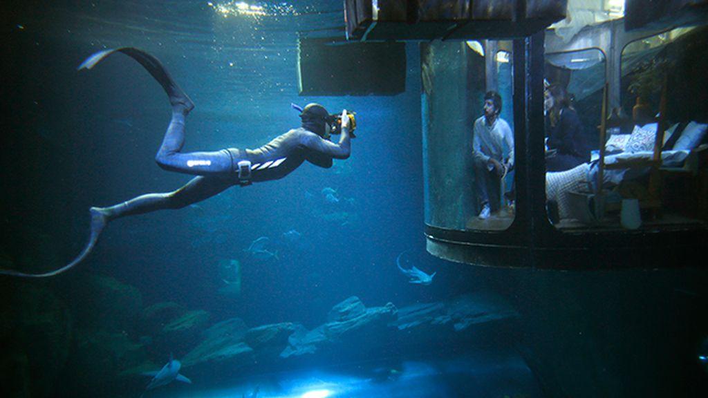 Una habitación en el acuario de París rodeada de 35 tiburones