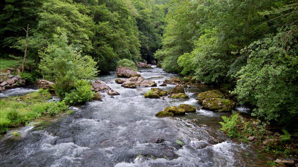 río río