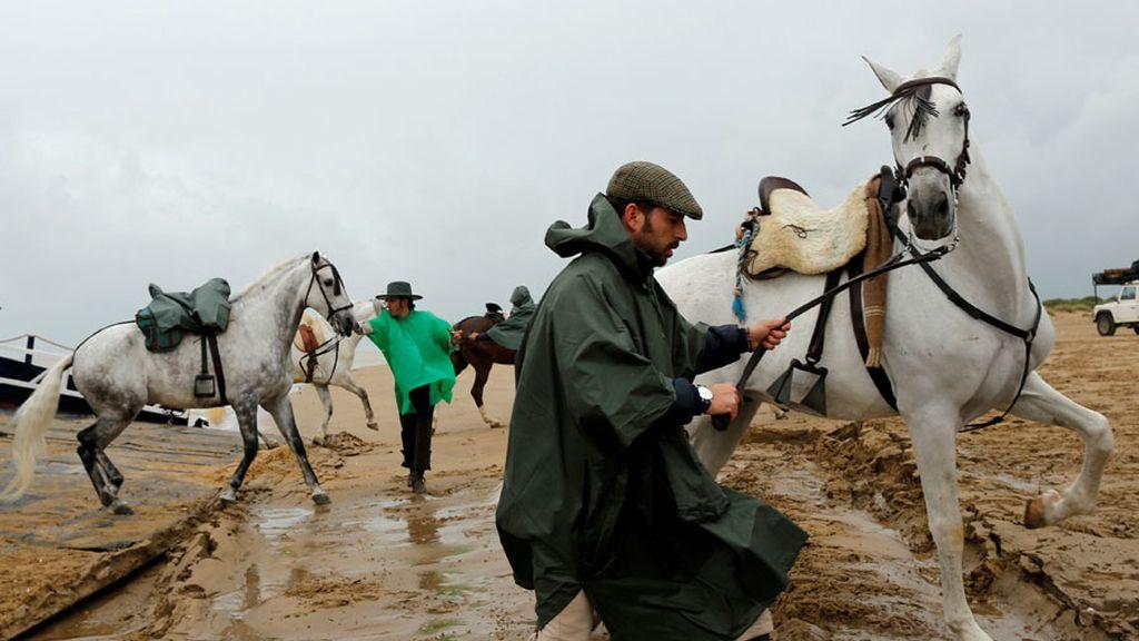 caballos el rocio