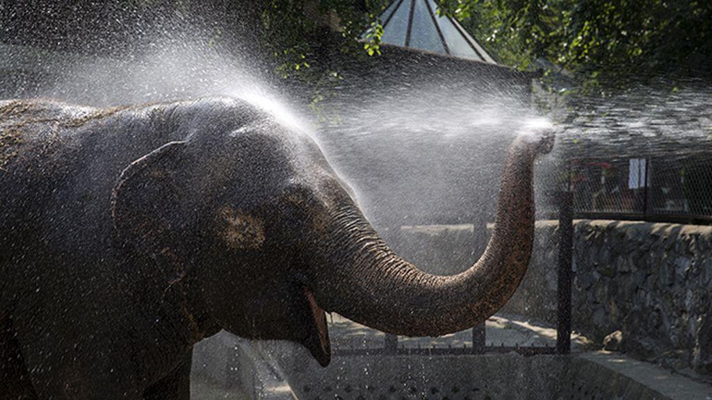 ¡Una ducha, por favor!