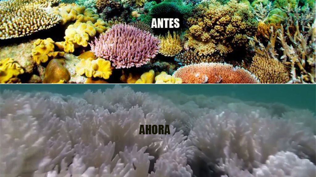 BARRERA DE CORAL ANTES/AHORA 2