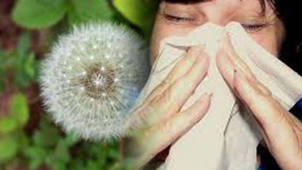 Estornudar todo le rato por un catarro o una alergia