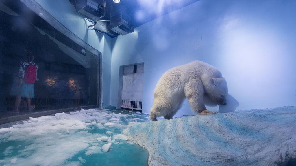 Pizza, el oso polar 'más triste del mundo' que vive en un centro comercial chino y que conmocionó a todos