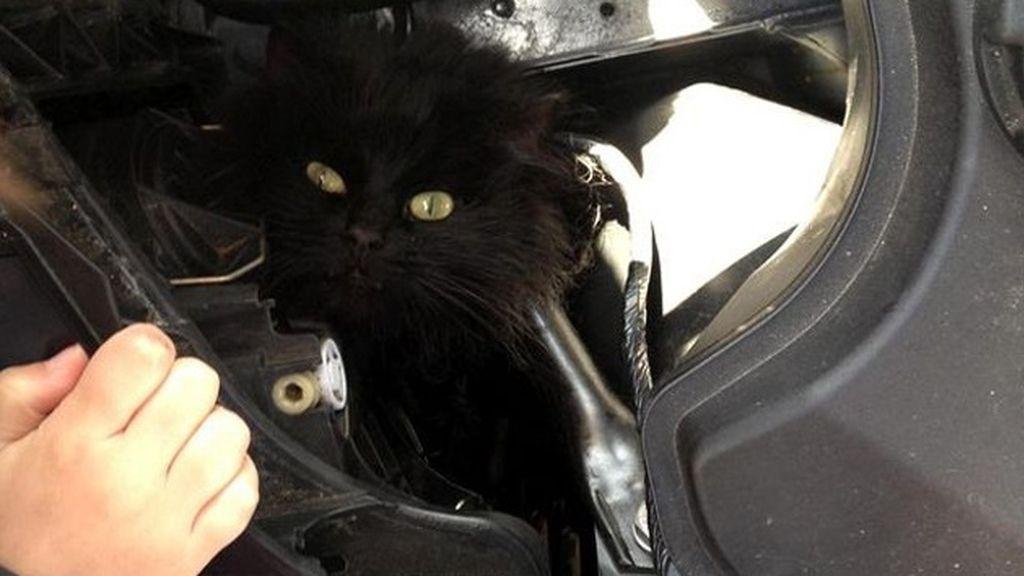 gatito coches 2
