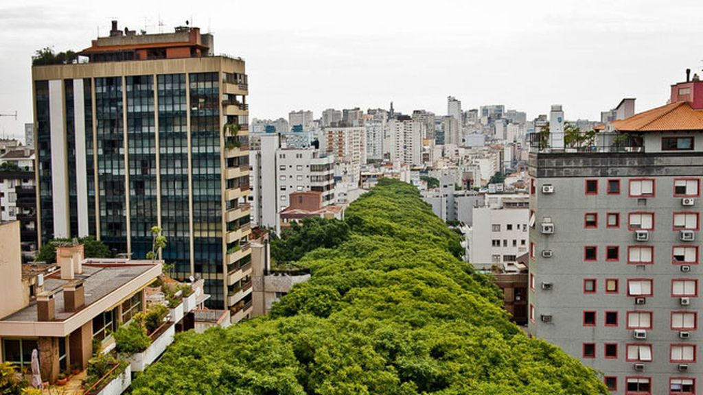 Puerto Alegre: una calle convertida en bosque