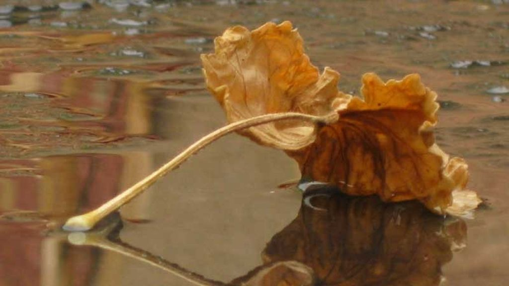 El petricor y la geosmina: el olor a tierra mojada y lluvia que son tan del otoño