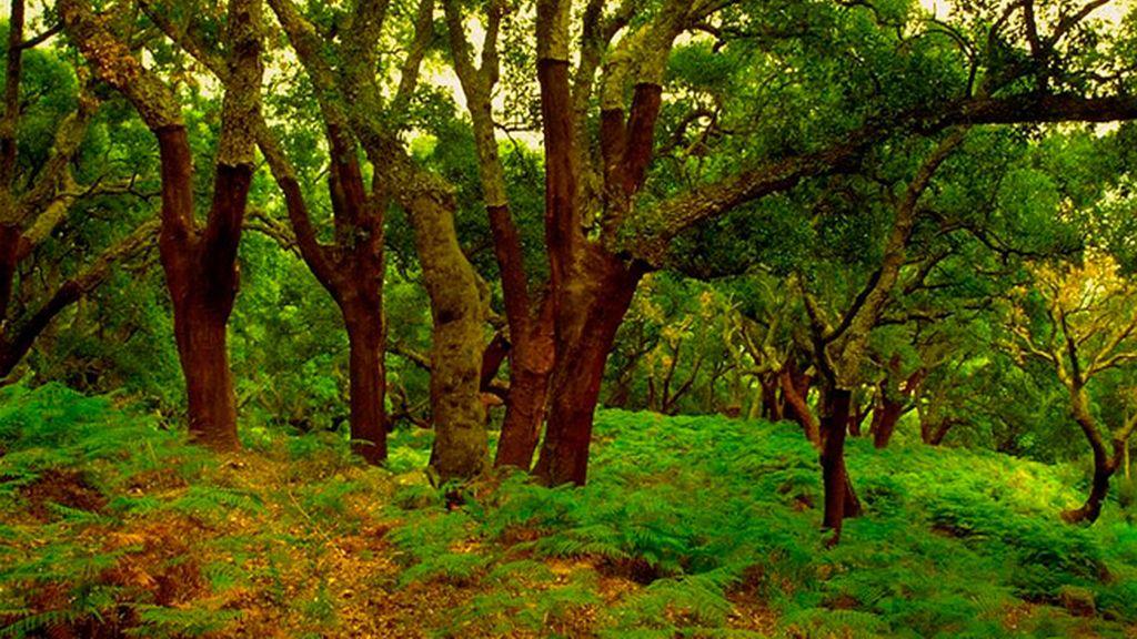 Entre los alcornoques del Parque Natural de los Alcornocales (Cádiz)