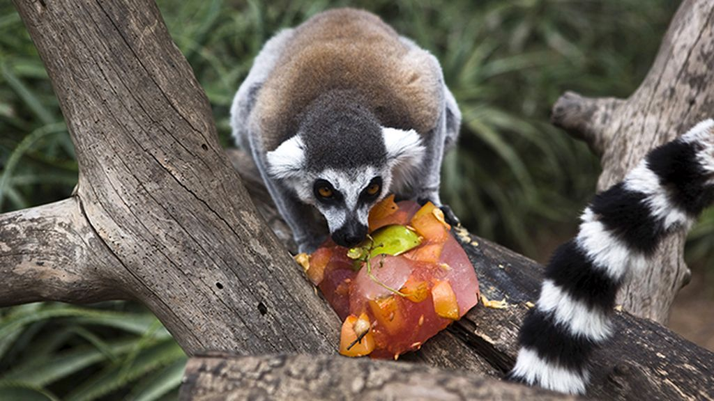 ¿Qué miras? ¡La fruta es sólo mía!