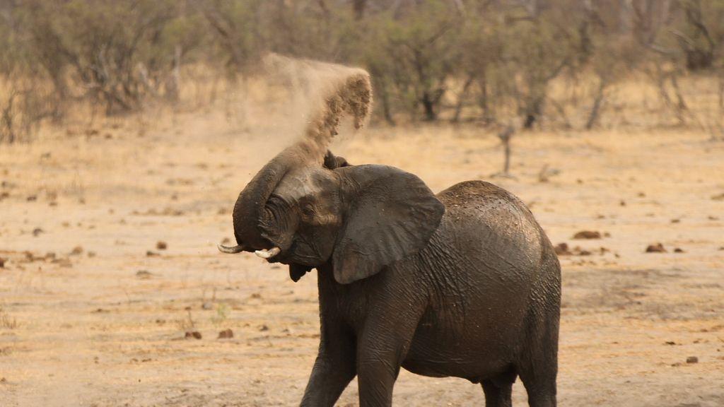 elefante sequía