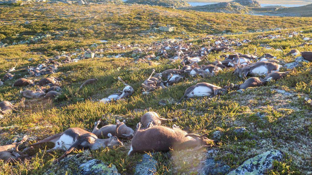 renos noruega