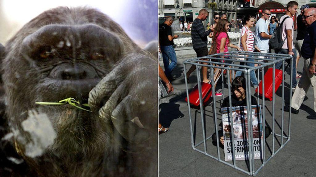 Que se cierren todos los zoológicos que no cumplan los mínimos