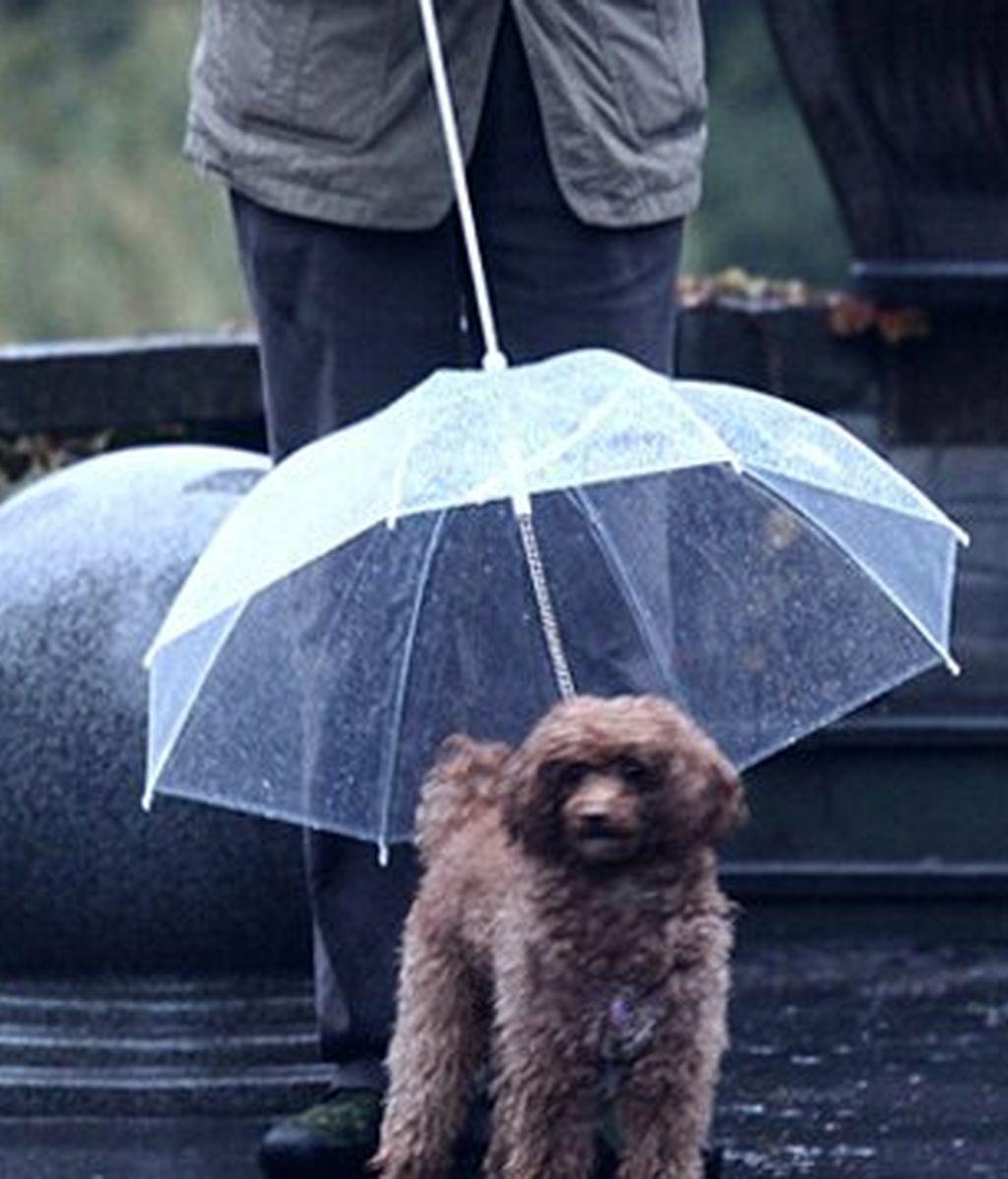 Paraguas Perro 2