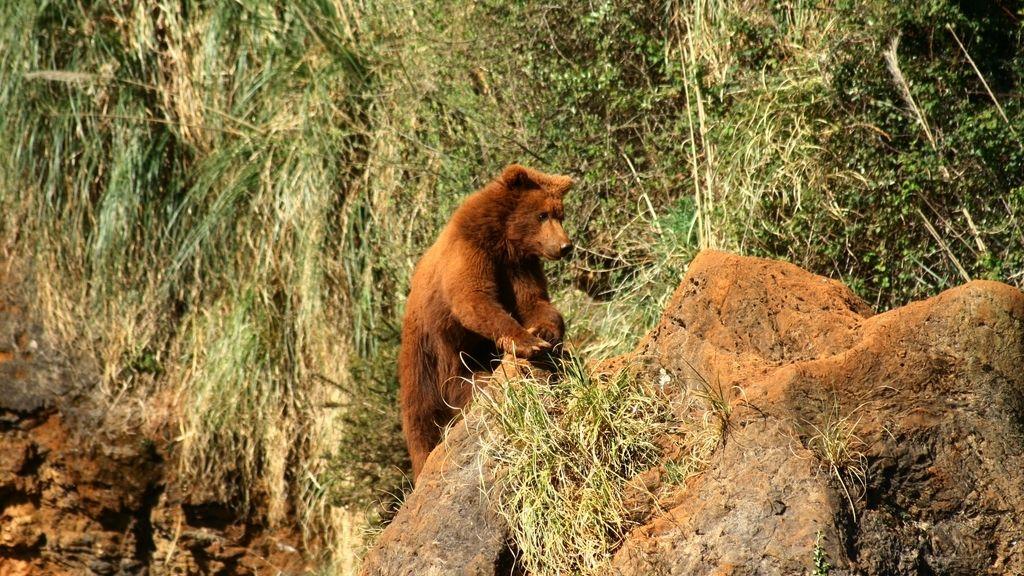 oso cabárceno