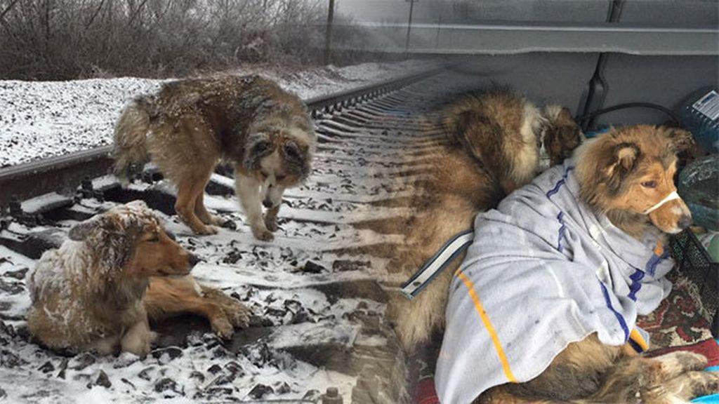 perros ucrania