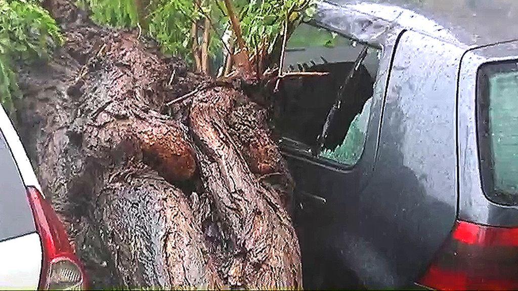 Un árbol rompe las lunas de un coche en Valencia