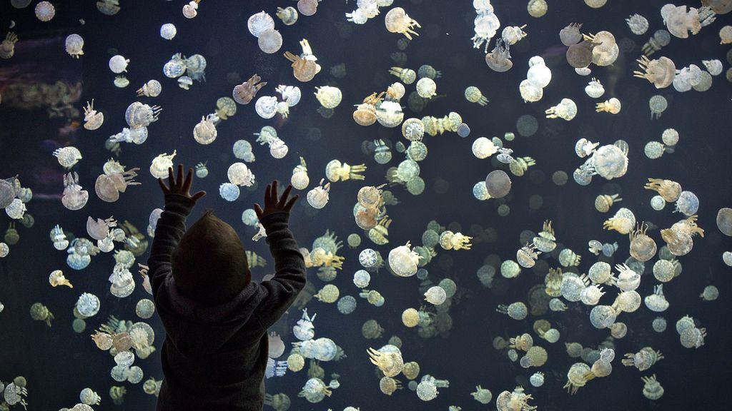 La inmortalidad de las medusas