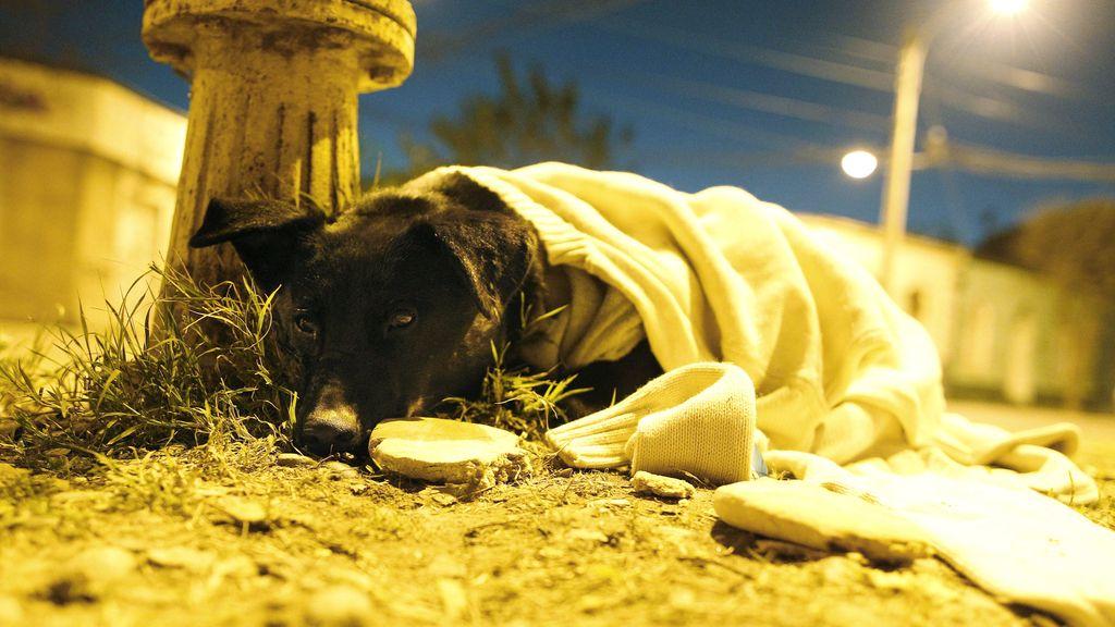 perrito abandonado 2
