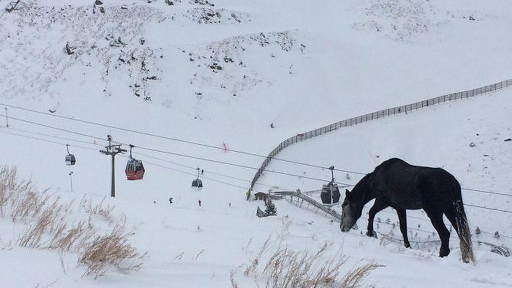 caballo sierra nevada