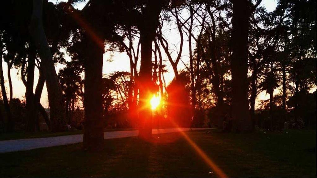 El espectáculo de luces del sol al pasar entre los árboles al atardecer