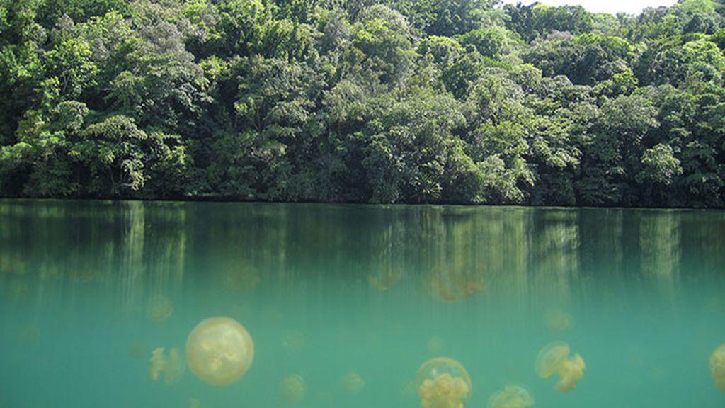 El Lago de las medusas, en las Islas Palaos (Indonesia)