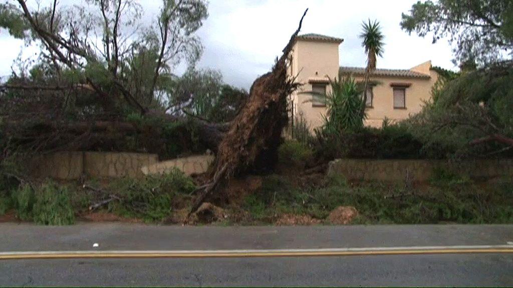 El tornado arrancó árboles en Mont Roig del Camp (Tarragona)