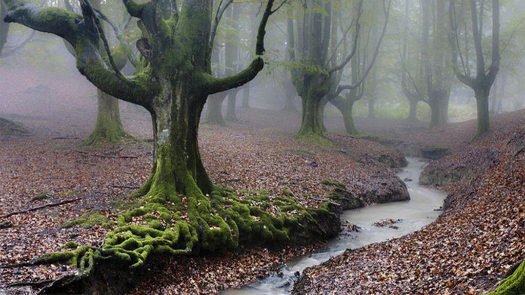 Naturaleza pura en el Parque Natural del Gorbea (País Vasco)