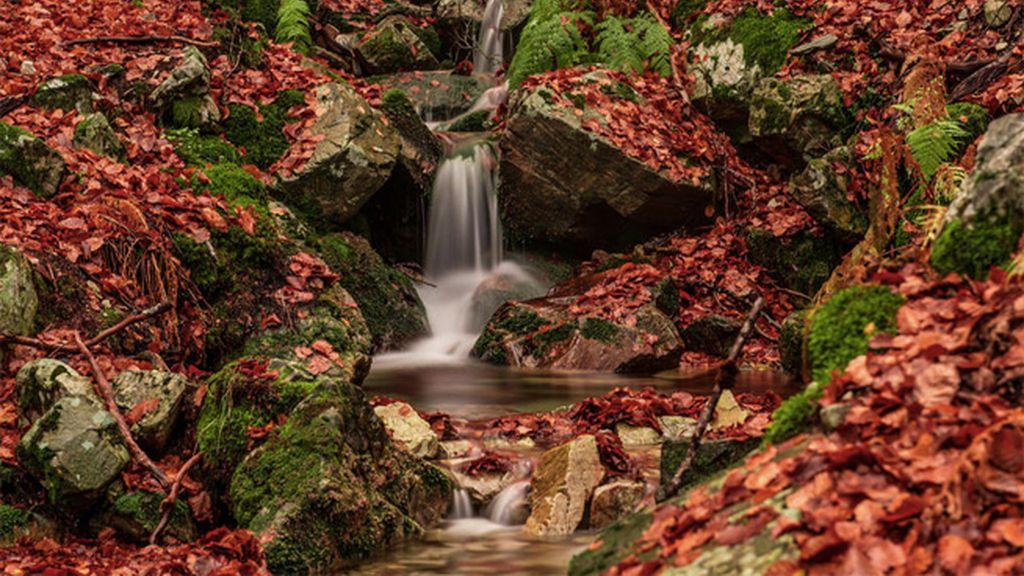 Los colores del otoño en el Hayedo de la Pedrosa (Madrid)