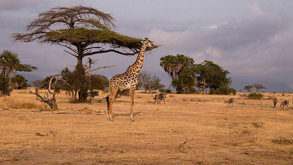 Reserva de caza Selous (Tanzania)