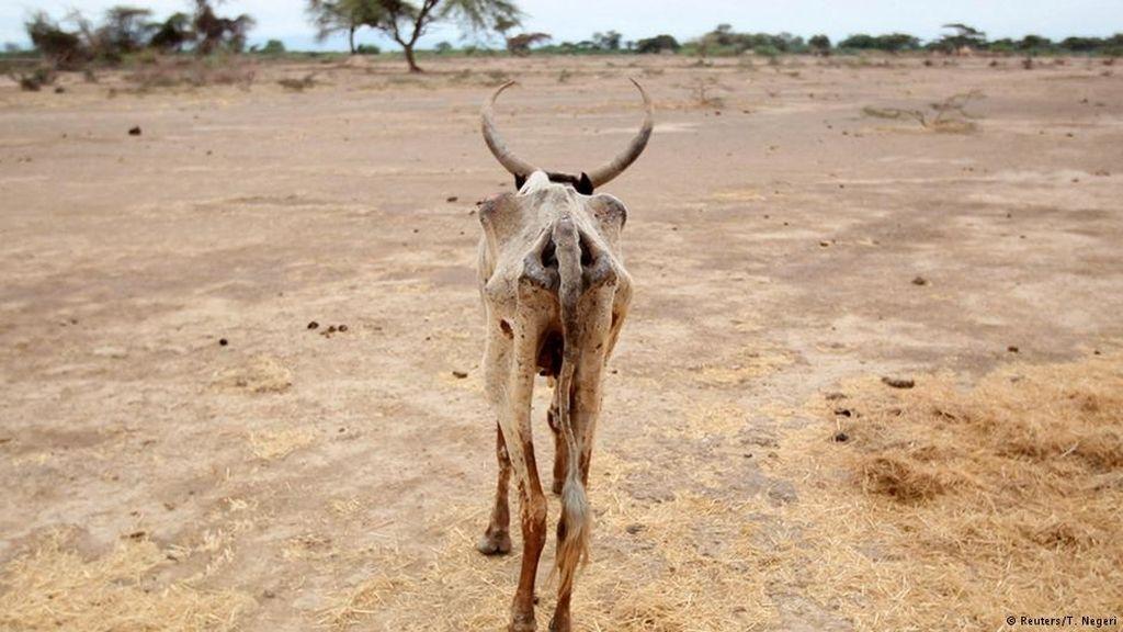 La sequía en el cuerno de África provoca hambruna y muerte de las vacas