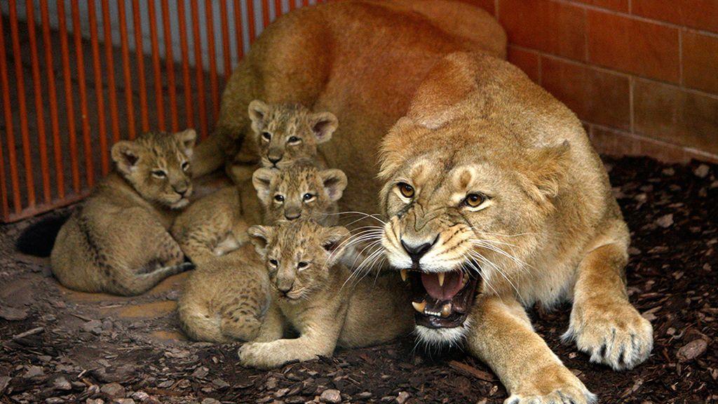 Las mejores imágenes de madres y crías