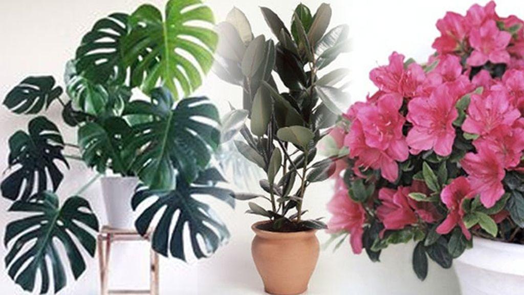 Eliminan elementos nocivos del aire como el amoníaco, el xileno o el formaldehído