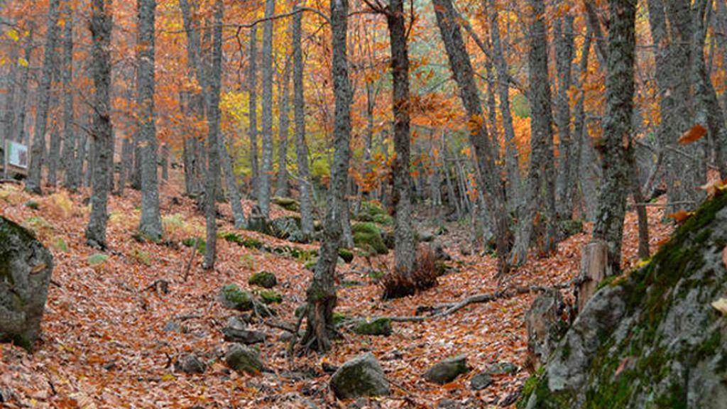 Un paseo en familia por el Castañar del El Tiemblo (Ávila)