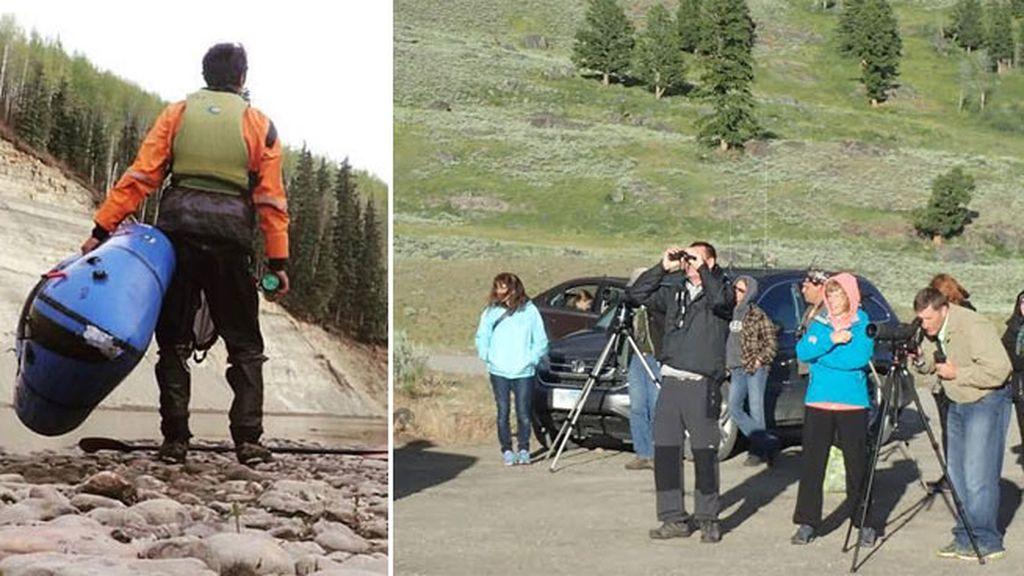 Hilo Yellowstone