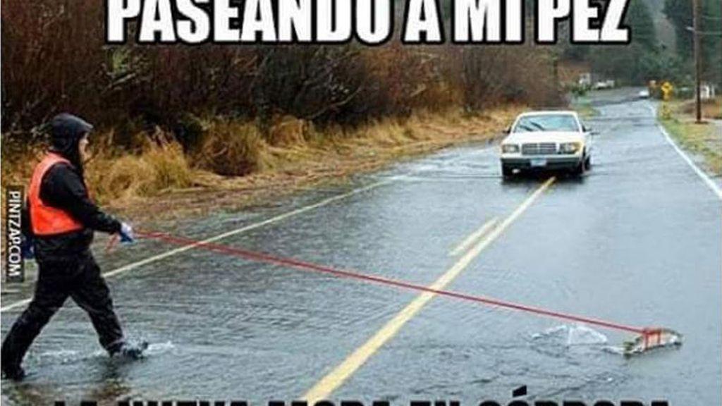 Memes lluvias