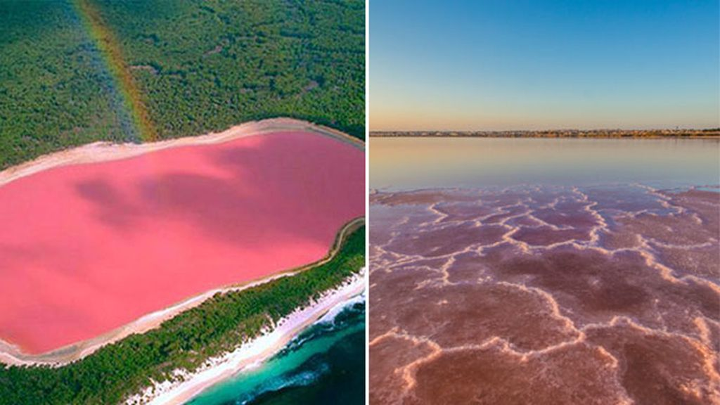 lagos rosas