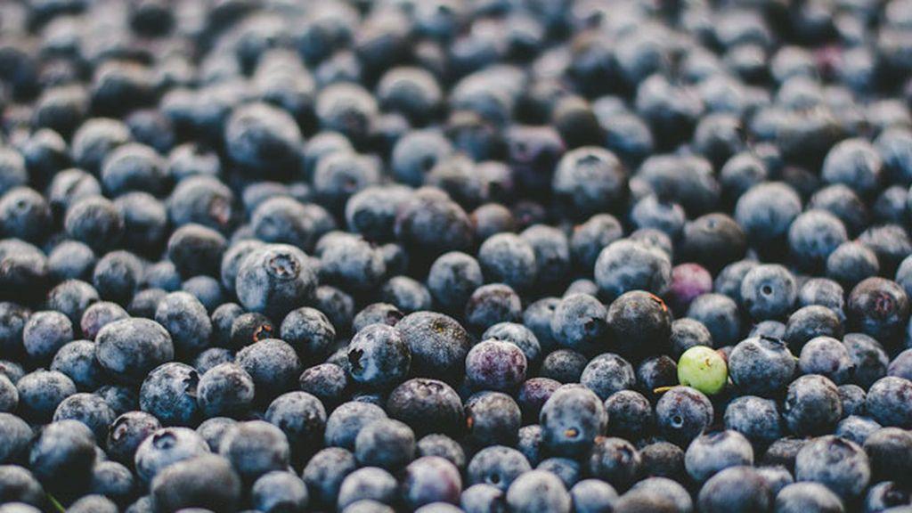 El arándano, fruta medicinal que mejora la vista... y la movilidad de los espermatozoides