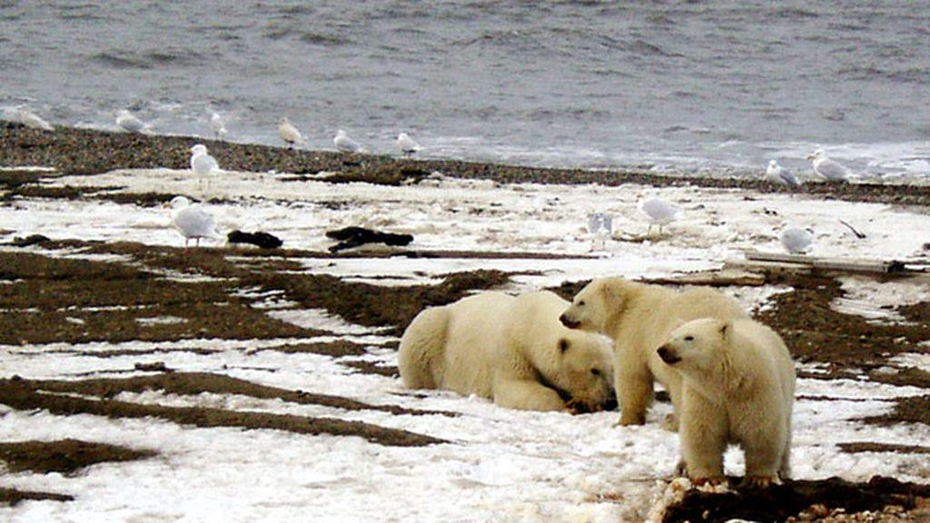 Que se ayude más a frenar deshielo del Ártico