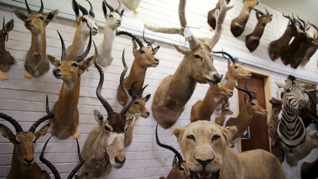caza amenaza especies