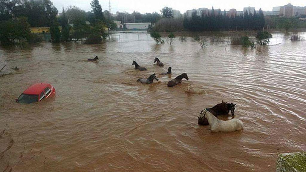 Los ciudadanos no han tardado en compartir imágenes de los destrozos